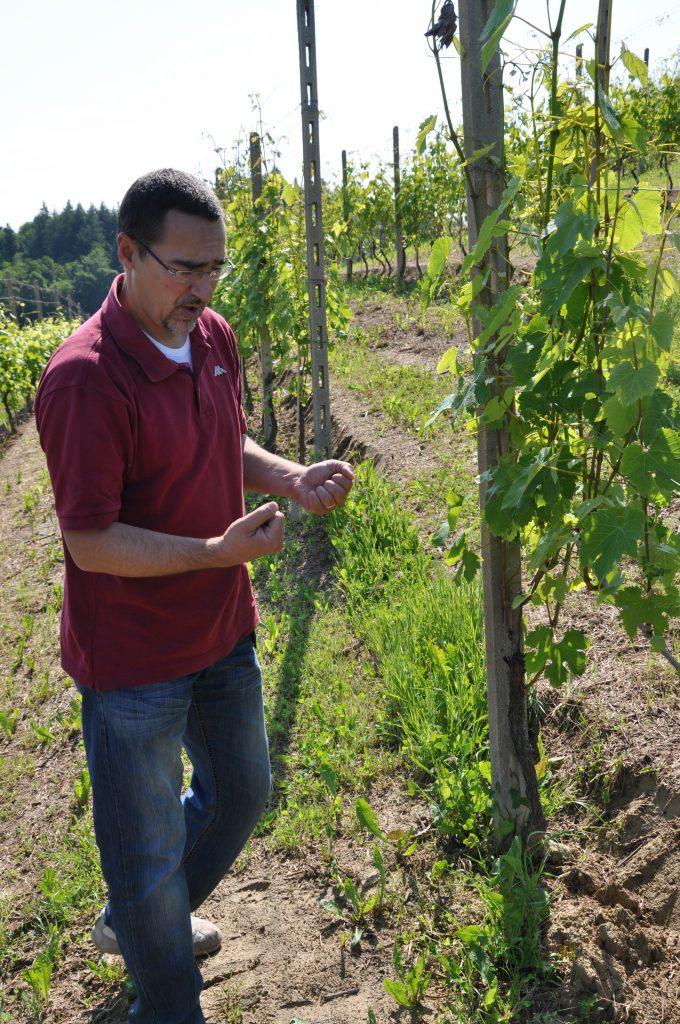 Fabrizio når han er bedst - i vinmarken